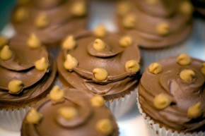 Chocolate cupcakes from Primrose bakery